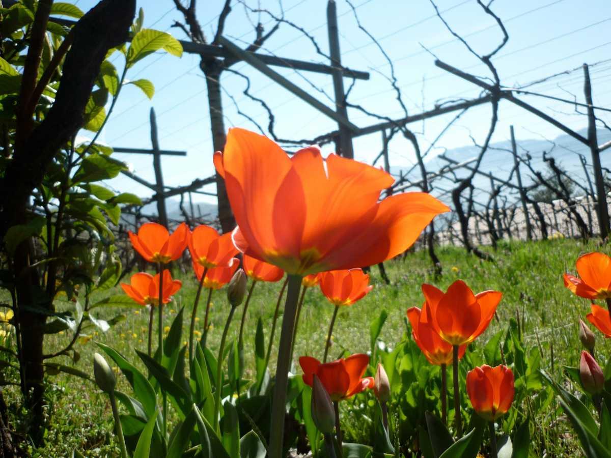 Der Garten der Villa Clavenz wird Sie mit wundervollen Pflanzen überraschen.